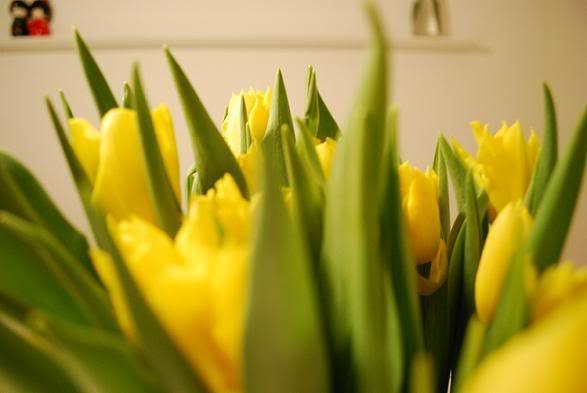 forår1